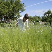 susie flax field