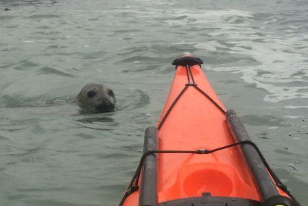 Seal With Kayak